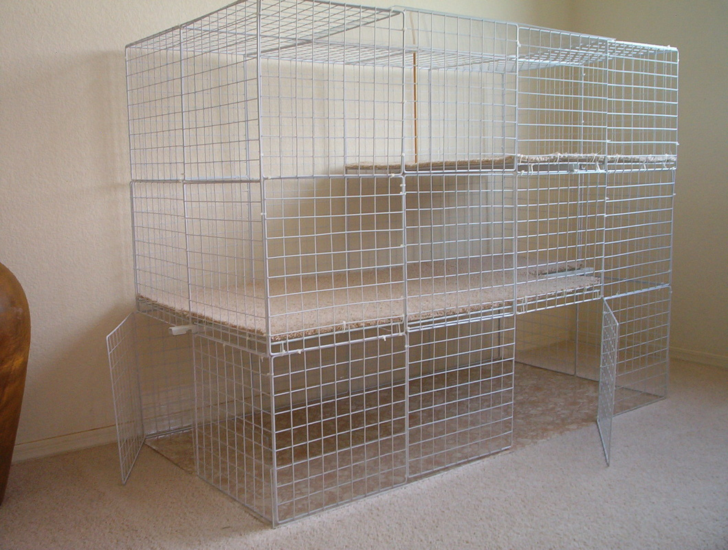 Setting Up A Cage Rabbits Indoors
