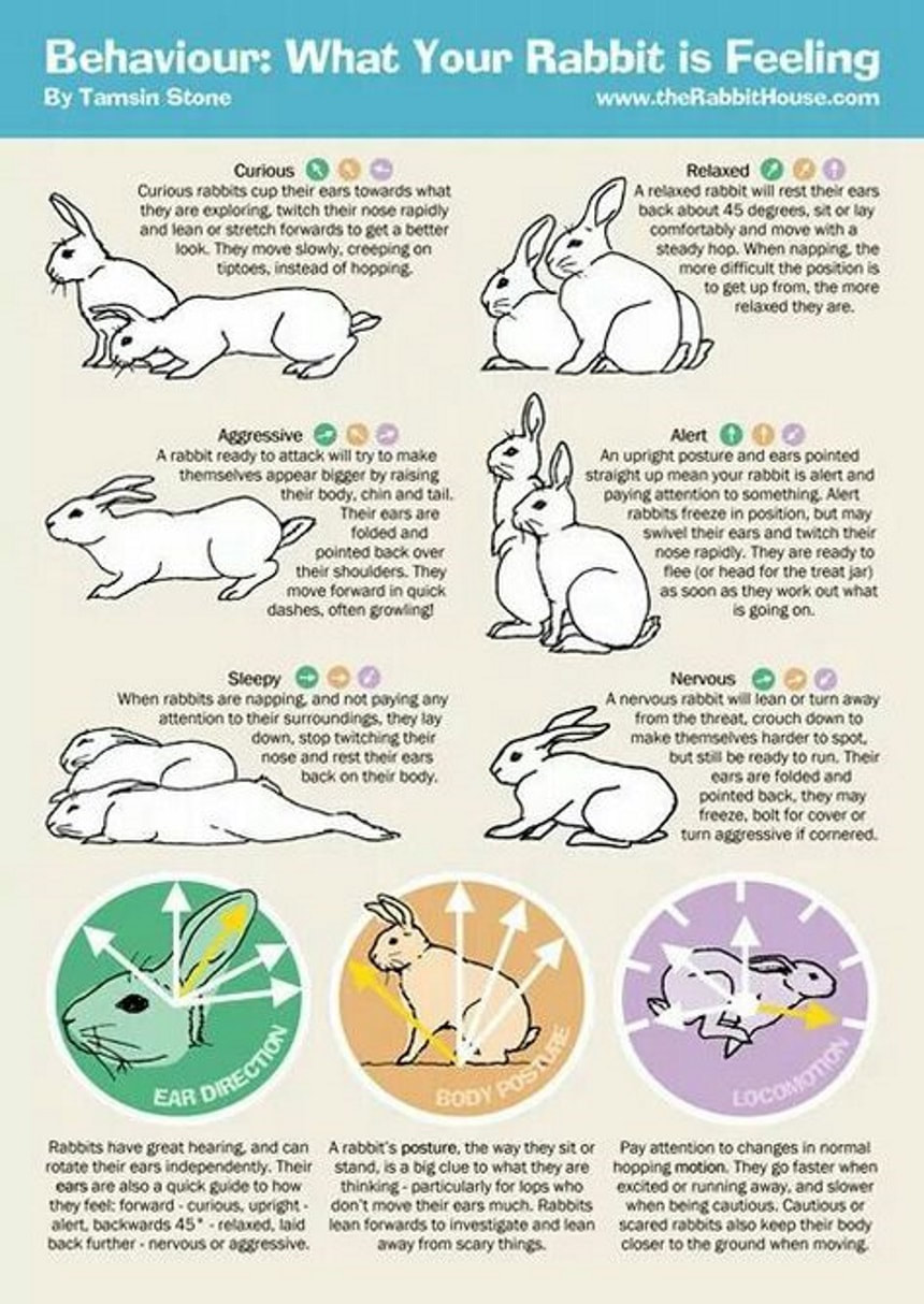 Bonding With Your Bunny Rabbits Indoors